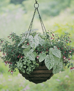 CASE/2 24 HANGING BASKET & LINER SET - EURO CLASSIC