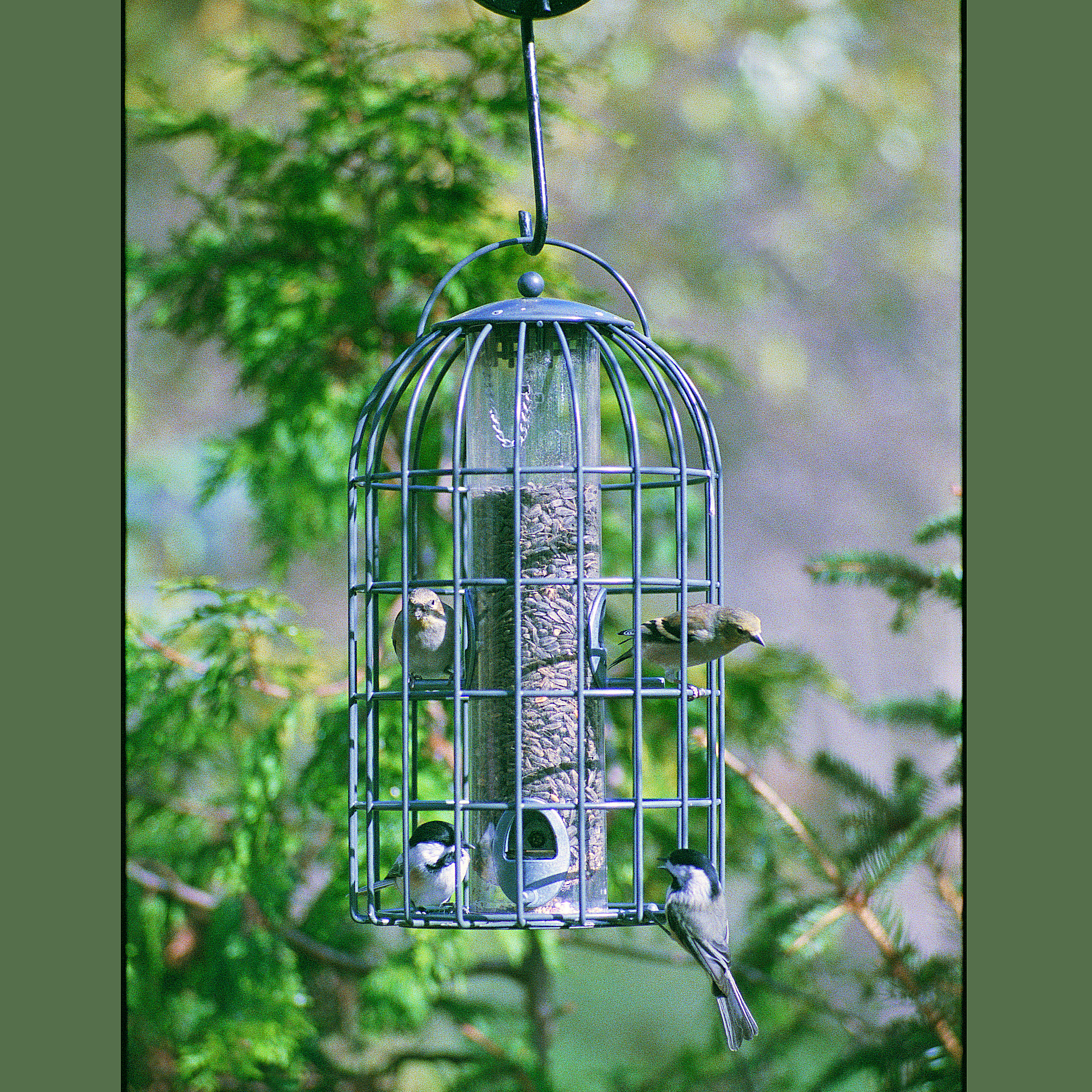 CASE/3 EXTRA LARGE SEED FEEDER